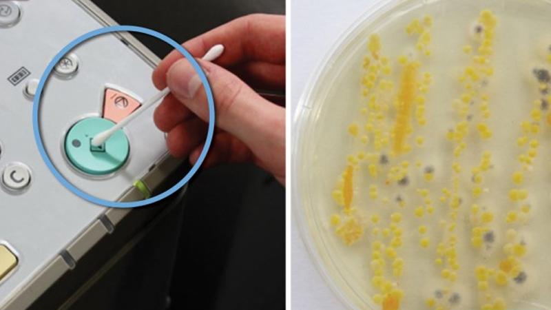 Chcieli sprawdzić ilość bakterii w różnych zakamarkach biura. Takich wyników się nie spodziewali...