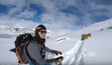 Rafael świętował swoje urodziny na stoku narciarskim, ale zamiast cieszyć się zjazdami, ruszył na pomoc zwierzęciu, które utknęło w śniegu