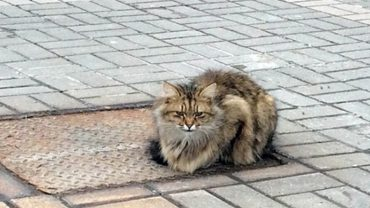 Ten kot od roku czeka w tym samym miejscu, mijany przez setki przechodniów. Powód jest bardzo smutny