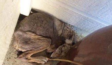 Sądzili, że ratują schorowanego psa, jednak gdy na miejscu zjawili się specjaliści, wyszła na jaw zdumiewająca prawda!