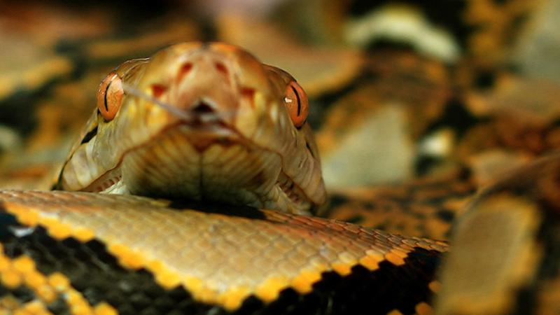 Każdej nocy spała ze swoim wężem w jednym łóżku. Któregoś dnia weterynarz powiedział jej coś przerażającego