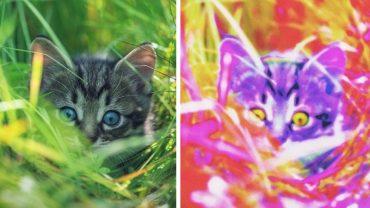 Zmysł wzroku ludzi znacznie różni się od tego, jaki posiadają zwierzęta. Sprawdźcie, jak wygląda świat oczami ssaków, gadów, ptaków i ryb