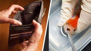 Emma trafiła do weterynarza ze swoją dławiącą się kamykiem rybką. Lekarz uratował zwierzę, a potem wystawił rachunek, którego kwota zmroziła Emmę