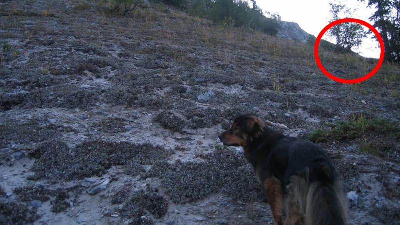 Wybrała się na spacer do lasu ze swoimi psami. Gdyby wiedziała, co stanie się później, nie wychodziłaby z domu...