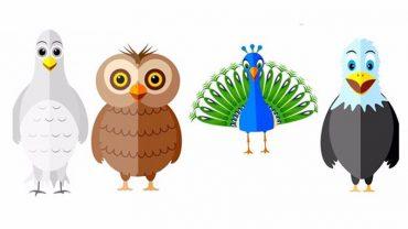 Wybierz któregoś z tych ptaków i poznaj swoją osobowość. Będziesz zaskoczony wynikami!