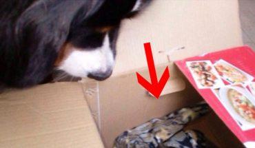 Pies pobiegł w kierunku śmietnika i zaczął kopać w zmarzniętej ziemi! Po chwili oczom jego właścicielki ukazał się bardzo smutny widok