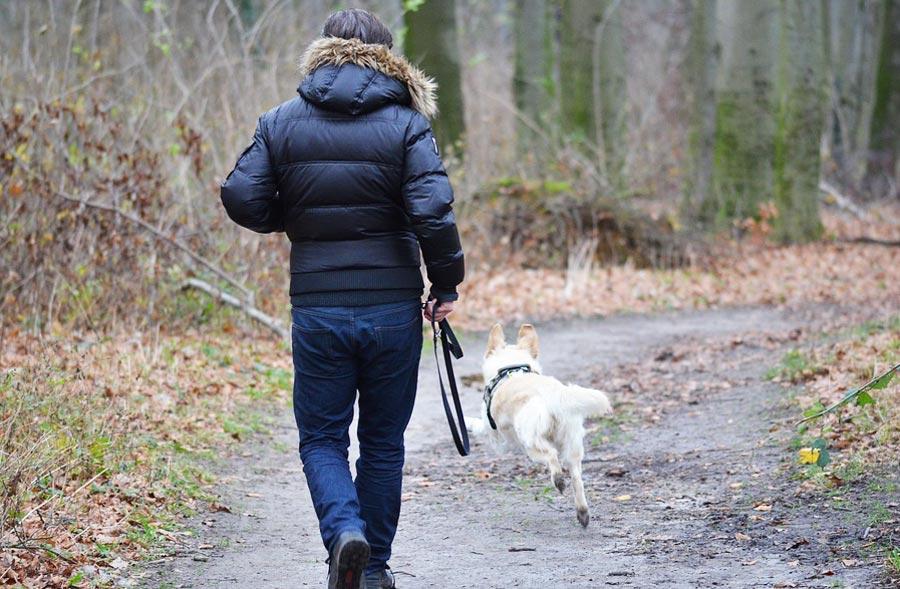 Hän oli koiransa kanssa kävelyllä, kun koira alkoi kaivamaan lunta. Hetken päästä hän näki mitä koira oli haistanut!