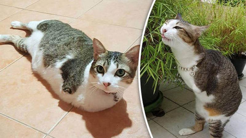 Roczna kotka spadła na druty wysokiego napięcia i ciężko ranna konała w męczarniach na ulicy. Z tłumu przechodniów pomogła jej tylko jedna osoba