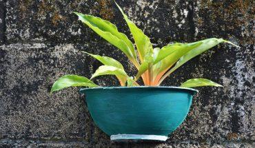NASA opublikowała listę 18 roślin, które skutecznie oczyszczają powietrze ze szkodliwych związków. Sprawdź, czy masz te gatunki w domu!