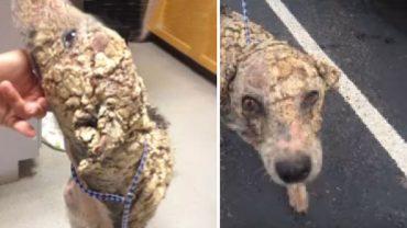 Ten pies był w tak fatalnym stanie, że nawet doświadczeni weterynarze nie mogli rozpoznać, jakiej jest rasy! Na jego widok wprost pękało serce