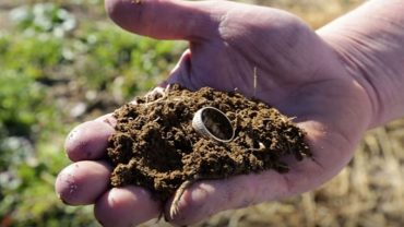Zagubiona obrączka 15 lat spokojnie przeleżała w ziemi na plantacji choinek, by wrócić do właściciela tuż po śmierci jego ukochanej żony