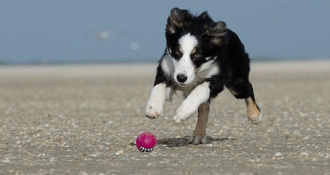 Eläinlääkäri katsoi koiran kuonoa ja keksi miksi koira oli niin alakuloinen