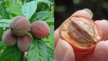 Te małe jagody są w stanie wyleczyć raka w kilkanaście dni! Kiedy staną się ogólnodostępne?