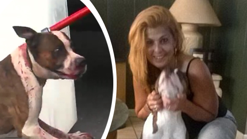 Pies został uśpiony, ponieważ jego właścicielka chciała mieć świetne zdjęcia na Instagram...