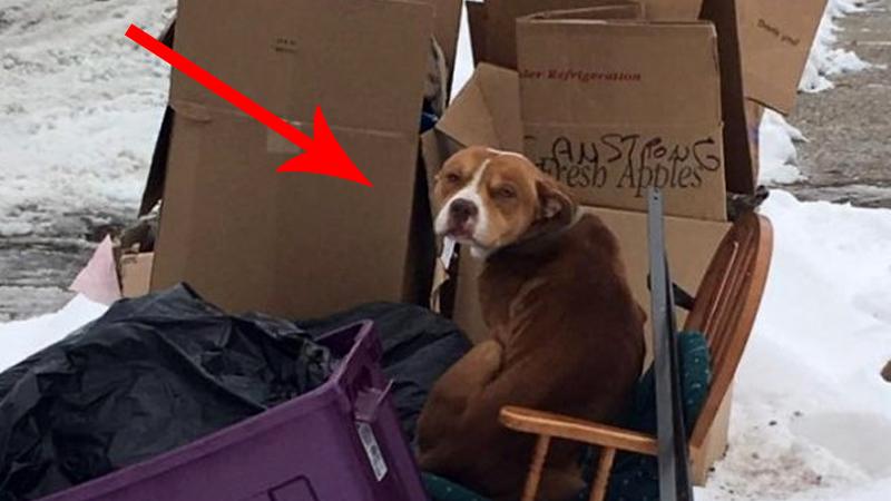 Ten pies złamał łapę, więc właściciel wyrzucił go w mroźny dzień na śmietnik. Niewiele brakowało, a ta historia skończyłaby się tragicznie