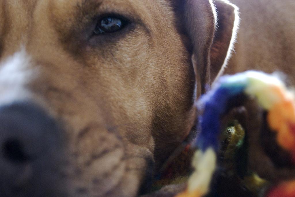 Koira mursi tassunsa, joten omistaja heitti sen ulos kylmänä päivänä. Tämä olisi voinut loppua murheellisesti