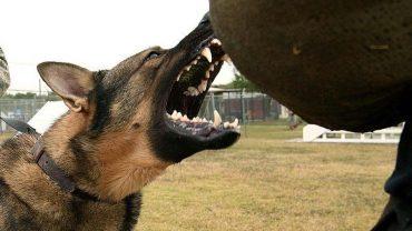 Co zrobić, gdy zaatakuje cię pies? Te rady pomogą wyjść cało z zagrożenia