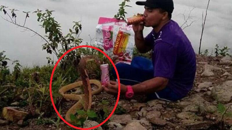 Tajlandczyk poślubił jadowitą kobrę twierdząc, że to jego zmarła żona w kolejnym wcieleniu swej reinkarnacji! Mężczyzna nawet  z gadem sypia w jednym łóżku!