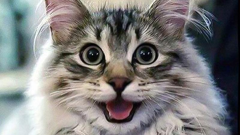 Jeśli nie możecie dogadać się z kotem, to może mówicie w złym języku. Poznajcie brzmienie kociej mowy aż w 19 językach z całego świata