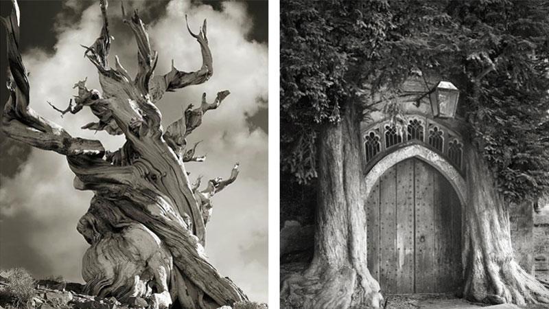 Beth Moon przez 14 lat podróżowała po całym świecie, by pokazać ludziom piękno starych drzew. Jej zdjęcia niemal namacalnie pokazują, czym jest potęga czasu