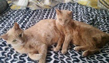 Zawirowania losu na 3 lata rozłączyły tych kocich braci. Czysty przypadek jednak sprawił, że znów się spotkali i mogli zamieszkać razem