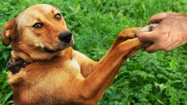 4 ważne lekcje, które twój pies daje ci codziennie. Warto je zapamiętać