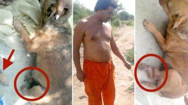 Bezwzględny Argentyńczyk bez zastanowienia uciął psu łapę! Powód był naprawdę błahy!