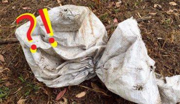 Ktoś przerzucił przez jej ogrodzenie stary, brudny worek. Dopiero gdy podeszła do niego zrozumiała, że trzeba szybko działać