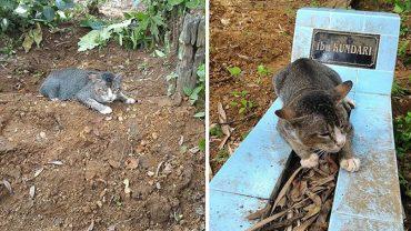 Ten kot codziennie przychodzi na grób zmarłej właścicielki. Jego zachowanie złamie ci serce…