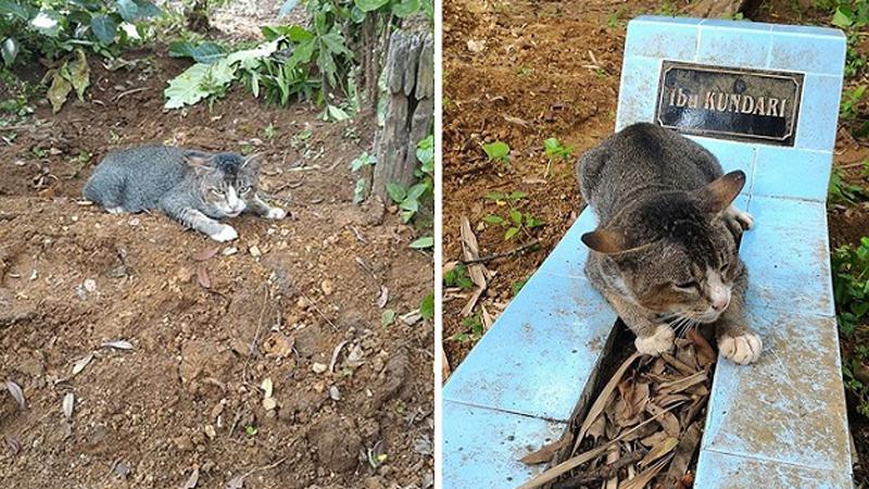 Ten kot codziennie przychodzi na grób zmarłej właścicielki. Jego zachowanie złamie ci serce...