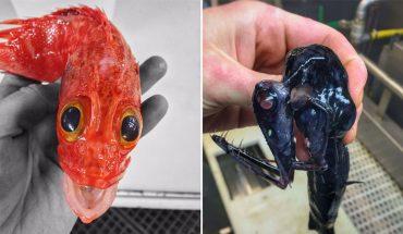 Jeśli ktoś marzy o ekstremalnej wyprawie na ryby, to koniecznie musi pojechać do Rosji, bo tamtejsi wędkarze wyciągają z wody prawdziwe potwory