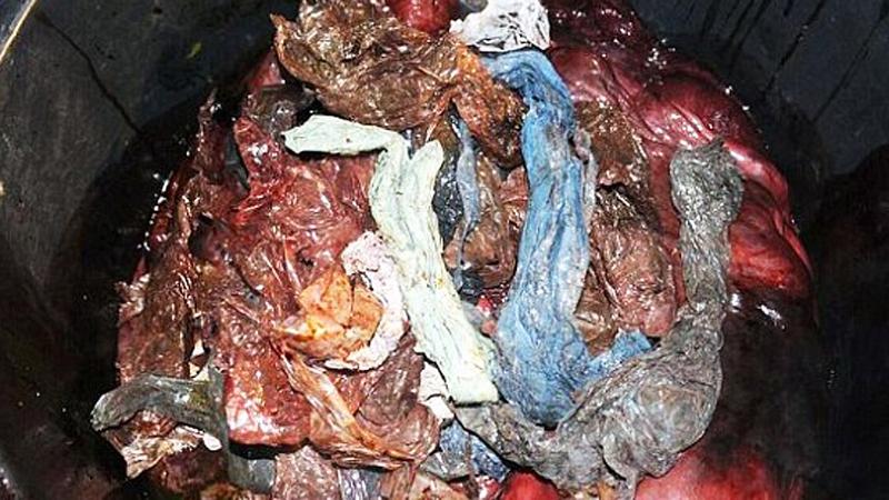 Badacze byli przerażeni, gdy otworzyli brzuch tego zwierzęcia. To nie miało prawa się w nim znaleźć!