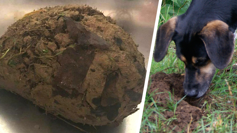Gliniana kulka zaczęła syczeć i obracać się wokół. Pies, który ją znalazł, szczekaniem zawiadomił właściciela. Mężczyzna dobrze wiedział co z tym zrobić!