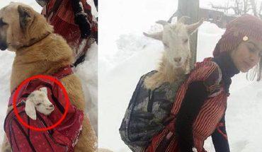 Mała pasterka prowadziła kozy przez górski stok, gdy nagle jedna z nich zaczęła rodzić. Z pomocą psa, zrobiła coś przesłodkiego!