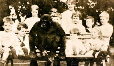Ten goryl był wychowywany razem z dziećmi. Gdy wpadł w łapy właściciela cyrku, już nie był tym samym zwierzęciem!