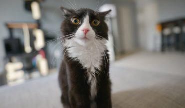 Na świecie żyje około 600 milionów kotów domowych. Jednak istnieje tylko 5 typów kocich osobowości!
