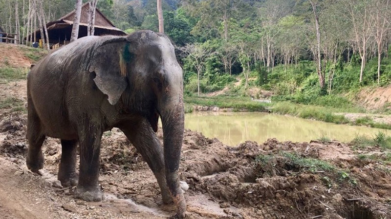 Słoń miał depresję i nie chciał żyć, wydawało się, że nic nie pomoże. Jedno spotkanie zmieniło wszystko