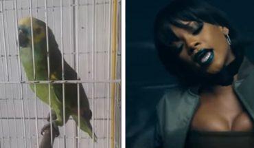 """Ta papuga podbija internet wykonaniem piosenki """"Monster"""". Niektórzy nawet twierdzą, że jest lepsza od Rihanny… Posłuchajcie i oceńcie"""