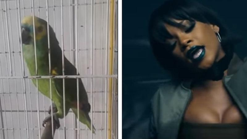 """Ta papuga podbija internet wykonaniem piosenki """"Monster"""". Niektórzy nawet twierdzą, że jest lepsza od Rihanny... Posłuchajcie i oceńcie"""