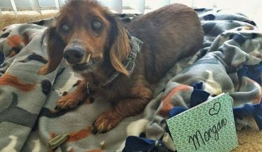 Ten 18-letni pies trafił do schroniska po śmierci właściciela. Choć wydawało się, że jego dni są policzone, teraz cieszy się życiem bardziej niż kiedykolwiek wcześniej