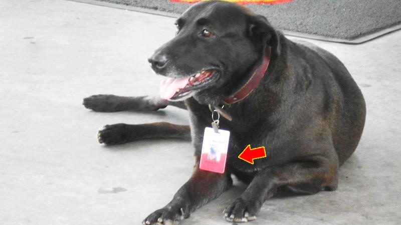 Klienci stacji benzynowej nie mogli uwierzyć, co jest na obroży tego psa! Gdy się jej przyjrzeli, zrozumieli wszystko