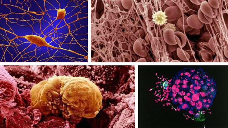 Tak wygląda człowiek pod mikroskopem. Spróbujcie zgadnąć, jakie części ciała ukazują te fenomenalne mikro-zdjęcia