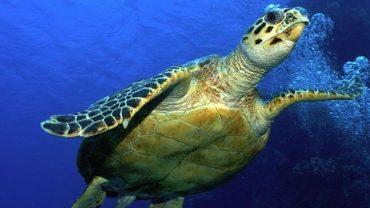 9 krytycznie zagrożonych gatunków zwierząt, których całkowite wyginięcie może skutkować zagładą całej ludzkości