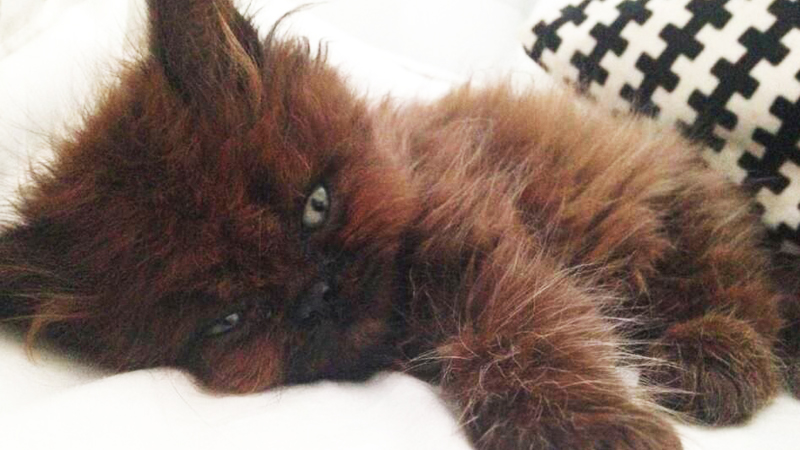 Adoptowała małego schorowanego kotka. Rok później nie może uwierzyć, co z niego wyrosło!