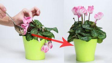 Zwykle wyrzucasz to do kosza, a możesz dzięki temu chwalić się najpiękniejszymi kwiatami w okolicy