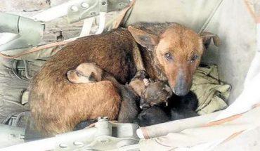 Poznaj Way, niezwykłą nianię z Argentyny! Suczka zajęła się niemowlęciem, które porzuciła własna matka. Maluch zawdzięcza jej życie