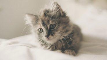 Naukowcy z Minnesoty dowiedli, że posiadanie kota wydłuża życie! Sprawdźcie, czym futrzaki tak pozytywnie wpływają na ludzi