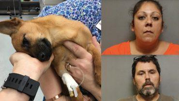 Dla zabawy dali szczeniakowi heroinę, tylko przypadek sprawił, że udało się uratować psiaka!