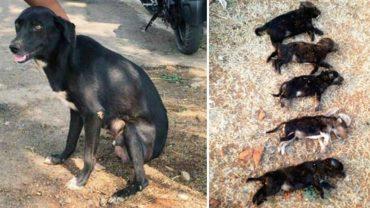 Okrutna kobieta zabija 8 szczeniąt na oczach ich matki, aby dać jej nauczkę! Internauci domagają się sprawiedliwości