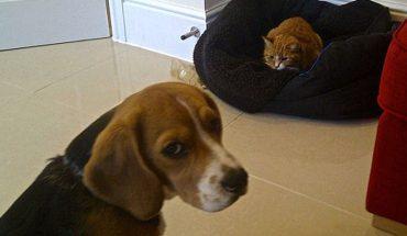 W starciu z nimi, psy nie miały szans. Te koty ukradły swoim szczekającym kolegom legowiska. Reakcja psów była mega śmieszna